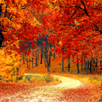 Running in the fall brings ideal weather and beautiful scenery. Check out these 6 reasons why fall running is the best for some running inspiration to stay motivated! #fallrunning #runninginfall #runninginspiration #runningmotivation